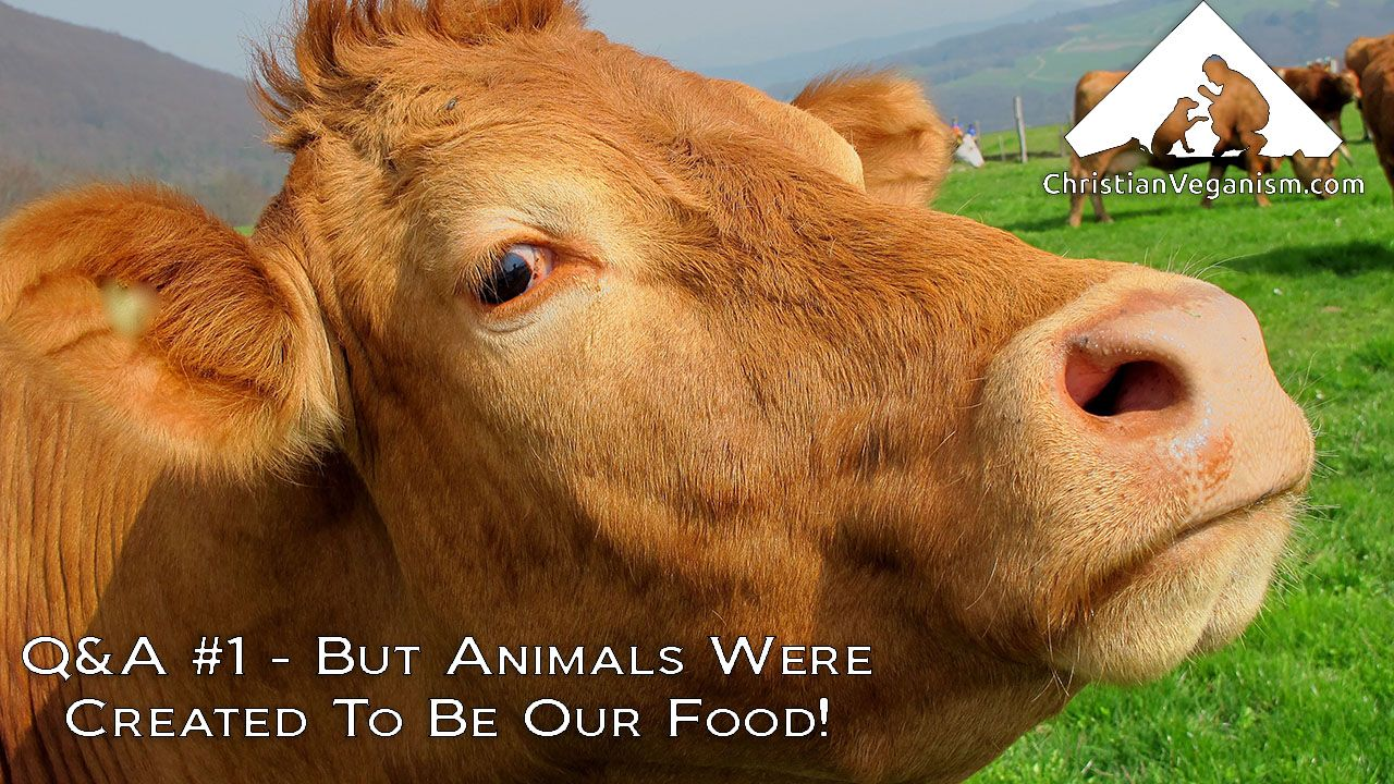 Q&A #1 - But Animals Were Created To Be Our Food!
