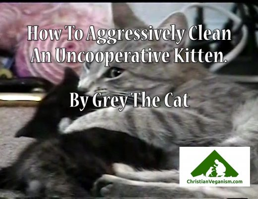 How To Aggressively Clean An Uncooperative Kitten - By Grey The Cat - Grey The Cat Memorial Video